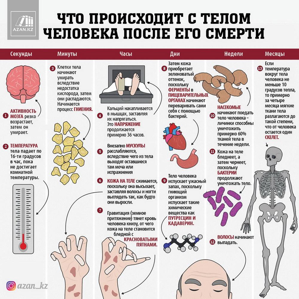 Что происходит с телом человека после его смерти